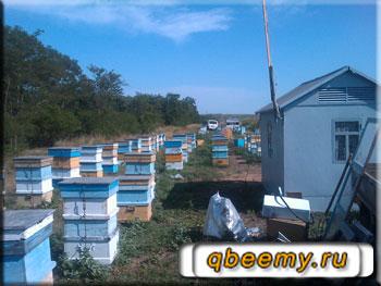 Любительское пчеловодство - это круто