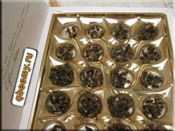 Что лечат пчелиным подмором
