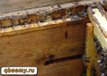 Пчелиный прополис между рамками в улье